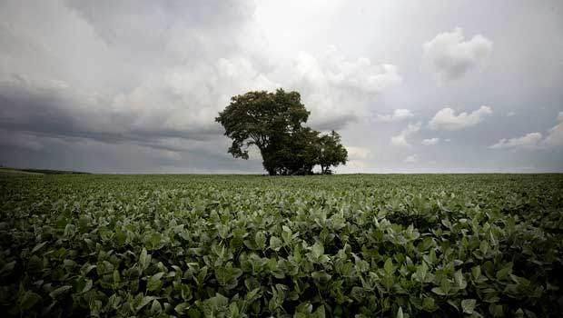 paraguay-soy-fields-620_0.jpg