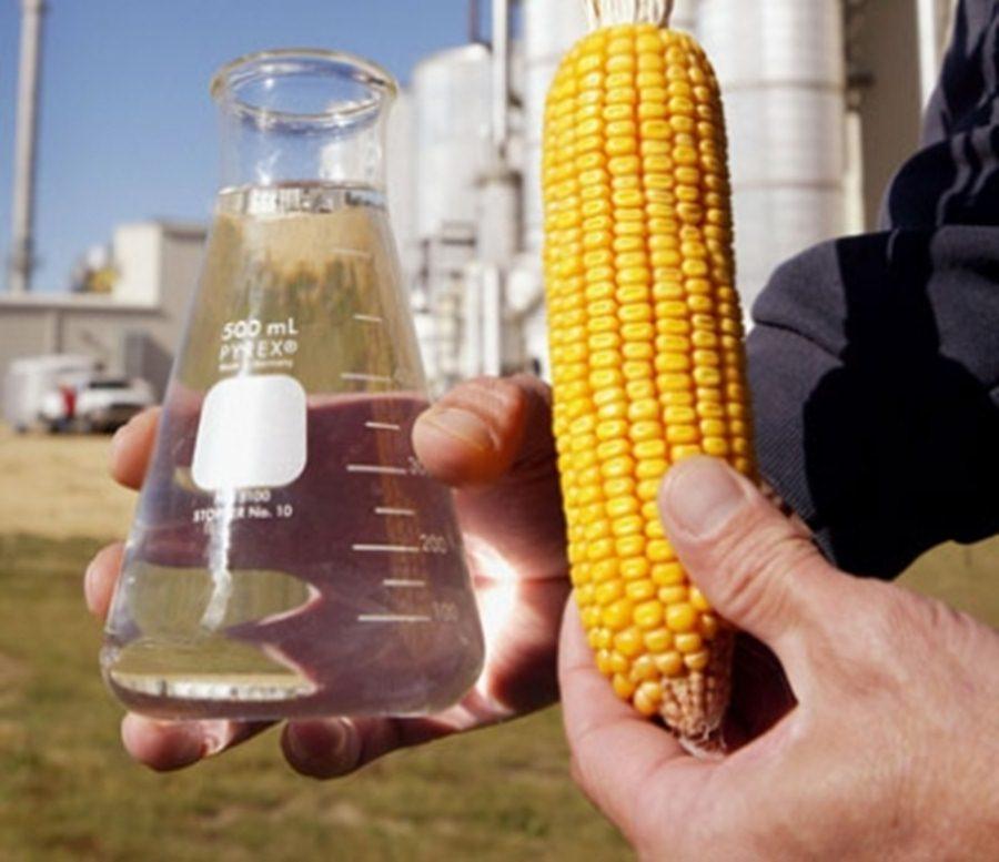 maiz_etanol.jpg