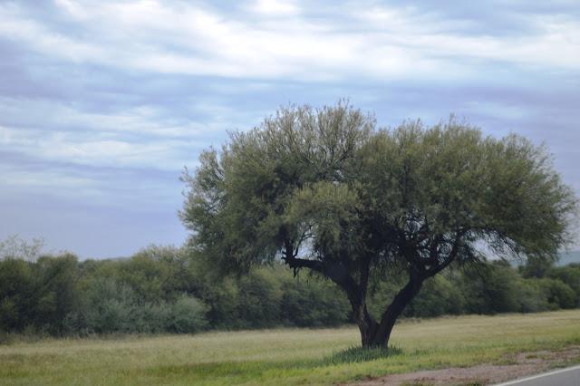 agroforestal-2.jpg