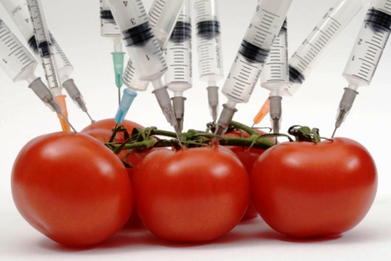 tomates-transgenicos.jpg