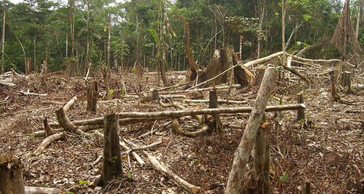 Acusan mujeres indígenas destrucción ambiental en Guatemala – ANRed