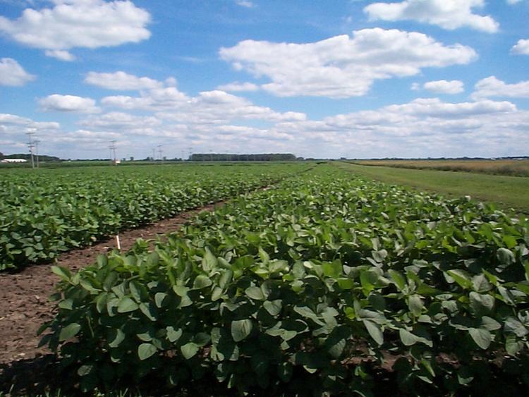 soja-4-plantacion.jpg