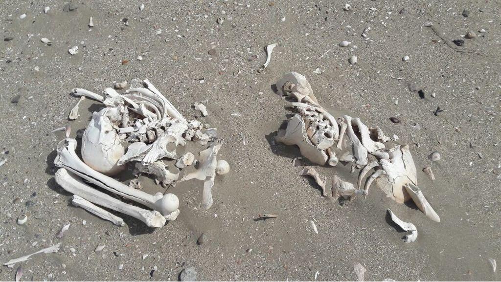 esqueletor_2.jpg